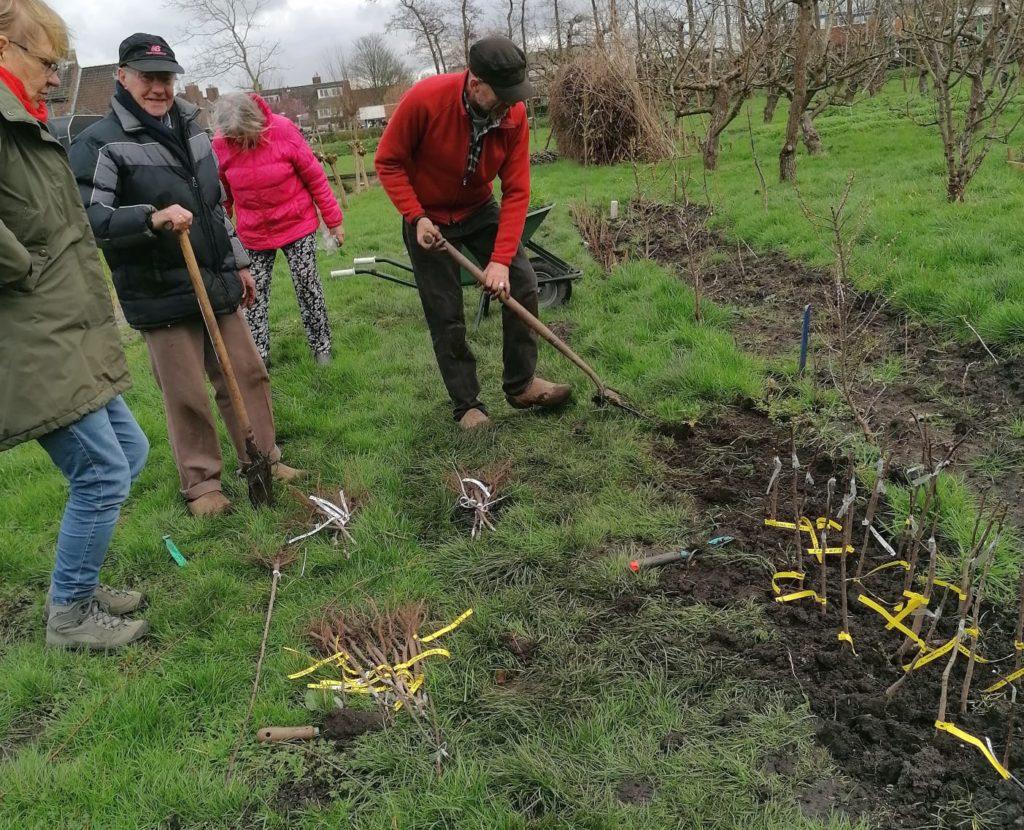 Vrijwilligers Voedselbuurtbos Geuzegroen planten geënte historische fruitrassen op wijktuin Zoete Aarde